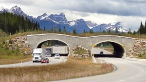 Near Banff, Alberta, wildlife safely cross over the Trans-Canada Highway.  Photo WikiPedant 2014